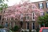 15.Houses.1400BlockCorcoranStreet.NW.WDC.21April2011