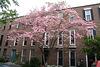 16.Houses.1400BlockCorcoranStreet.NW.WDC.21April2011
