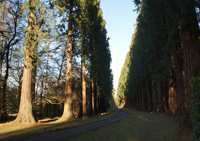Red Cedars at Minsteracres