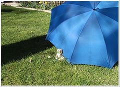 der Osterhase zu Besuch beim Blauen Schirm