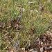 Myrtilliers en mars
