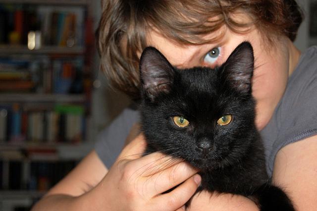katzen können auch waffen sein...
