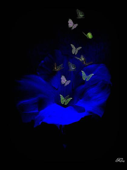 Tu as une fleur bleue contondante.....jpg