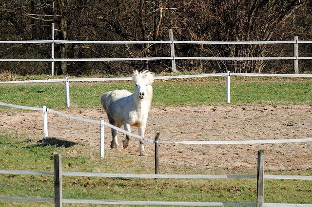 Am Pferd vorbei...
