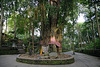 Holy tree in the Sacred Monkey Forest in Ubud