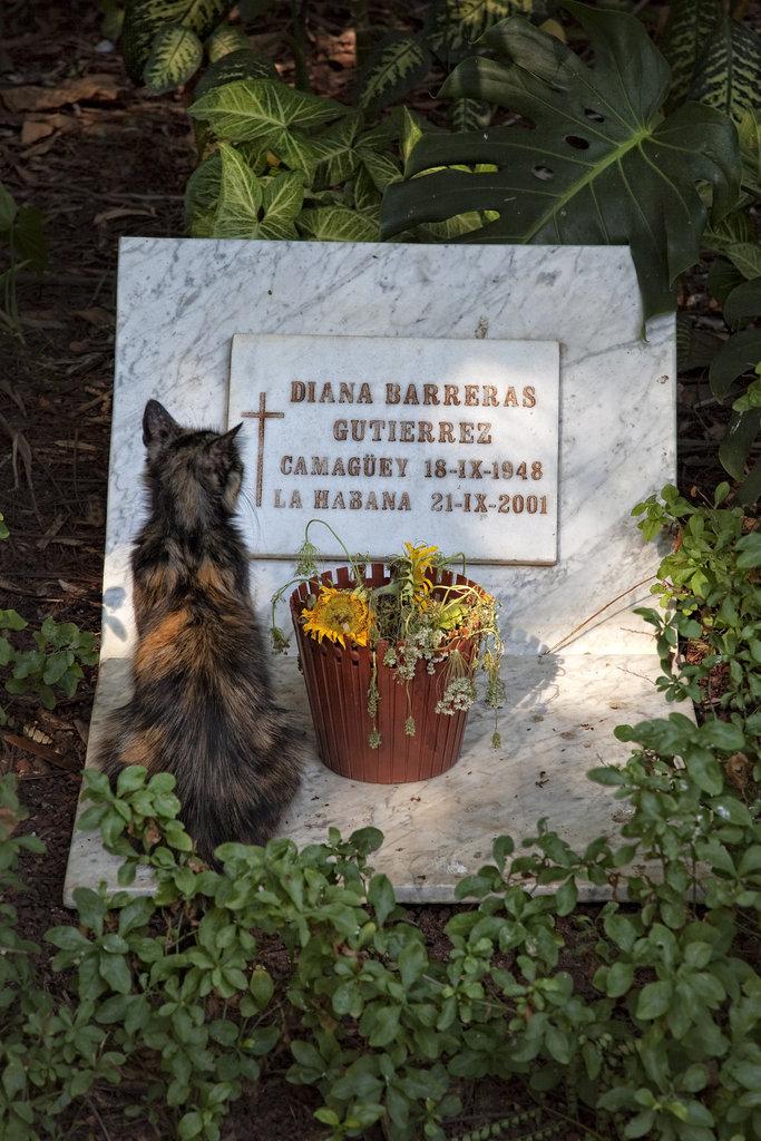 cemetery_cat