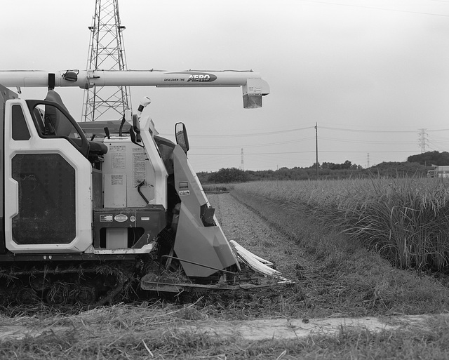 Rice harvester in a paddy