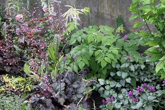 Quelques plantes d'ombre ou mi-ombre 10657374.fda6c915.560