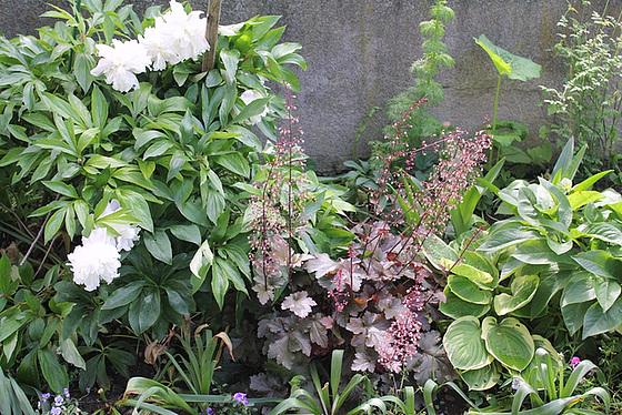Quelques plantes d'ombre ou mi-ombre 10657376.b739f1a2.560