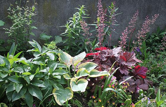 Quelques plantes d'ombre ou mi-ombre 10657377.00d28c06.560