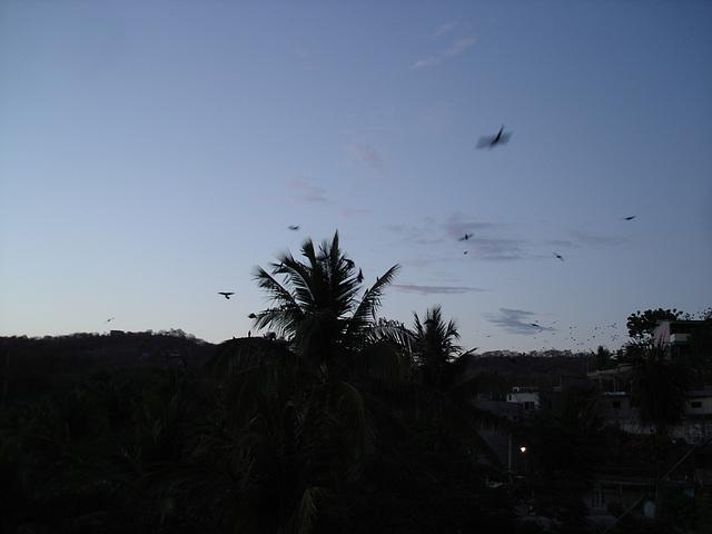 Puerto Angel, Oaxaca. Mexique / 14 janvier 2011.