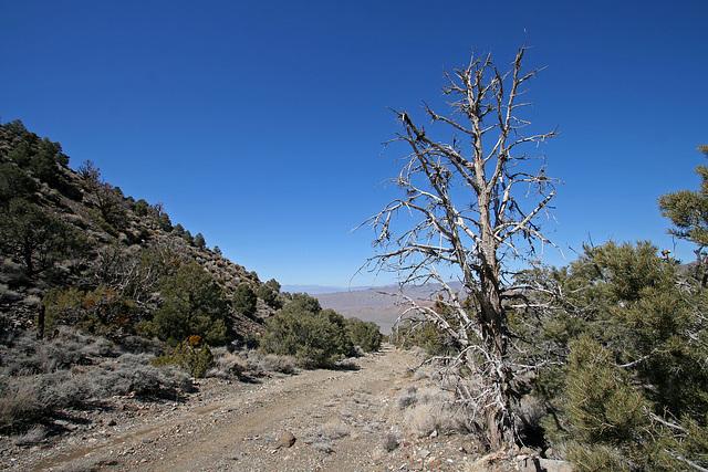 Above Wildrose Canyon (9645)