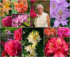 Rhododendronpark bei Rathen - kleine Bastei