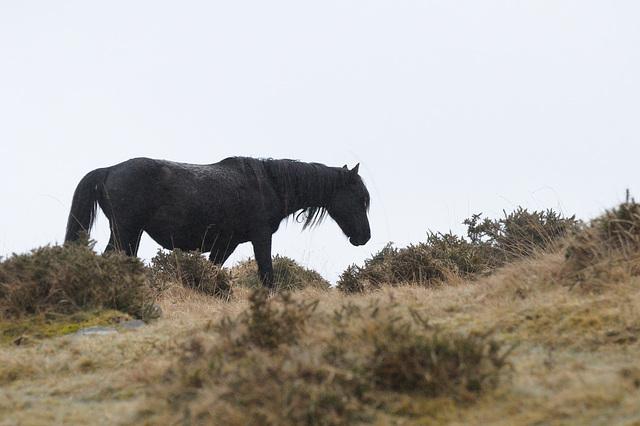 Nasses Pferd