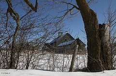 Entre deux arbres en hiver