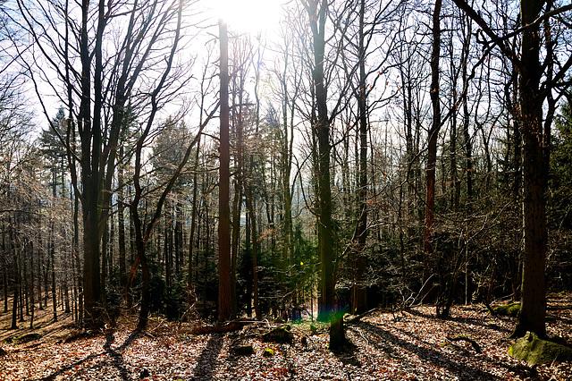 Zurück durch den Wald