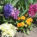 Jacinthes- Bouquet garni