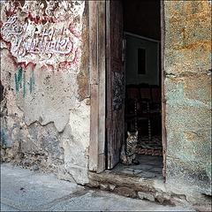 Habana_cat