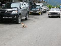 Vorsicht Huhn!
