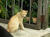 Katzen ohne Schwänze