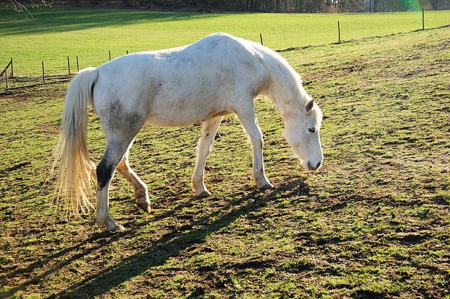 Am andern Pferd vorbei