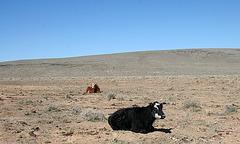 Nevada (9516)