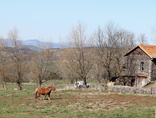 cheval comtois dans son environnement