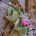 Cactus Flowers (1391)