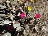 Cactus Flowers (1404)