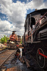 Locomania_in_Australia