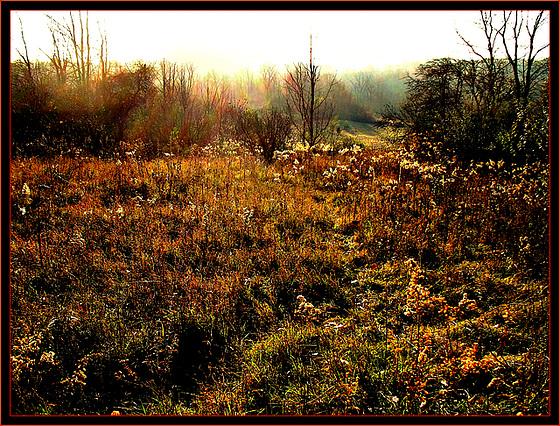 Autumn Chorus