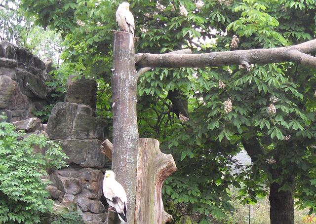 2011-05-11 12 en Dresdena zoologia ĝardeno