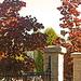 Souvenir de l'automne !