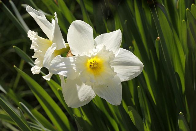 Narcisse face et profil
