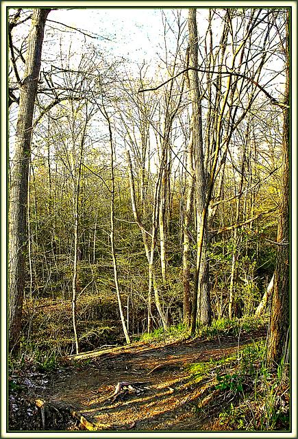 Vernal Wood