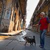 'Habana-sized'_dog