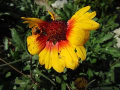 Flower (0010)