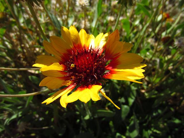 Flower (0011)