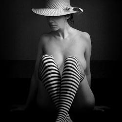 stripes 'n' meise (bis)