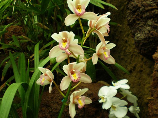 orquideas (5)