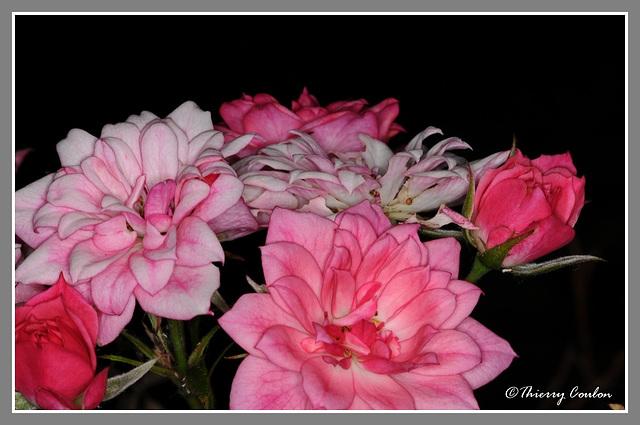 Rose er pluie 3