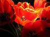 Romanze in orange