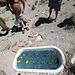Marble Tub (0238)