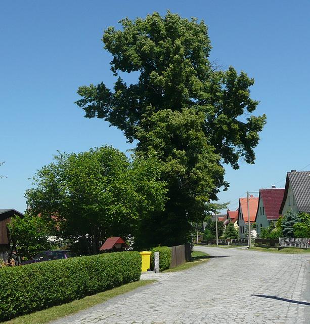 Dorfstraße mit Baum