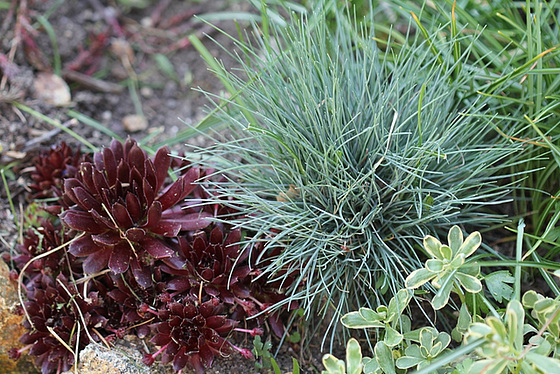 les petites Poaceae et Cyperaceae 10409080.63e6c37b.560