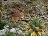On the trail to Maidenhair Falls in Anza-Borrego (1658)