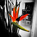 flower_police