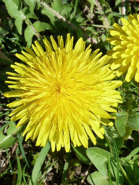 Viele schöne Frühlingstage, de nombreux belle journée de printemps, many beautyful day in spring