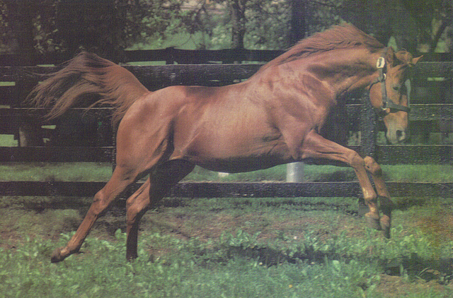 Affirmed, Thoroughbred Calendar Collection