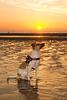 Jack Russell Terrier Rico DSC06393